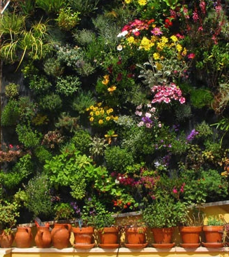 Membuat vertical garden | khedanta
