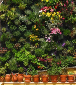 Tips Membuat Vertical Garden